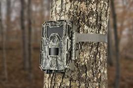 Máy bẫy ảnh Bushnell Trophy Cam HD Aggressor 119875C  24MP Low grow
